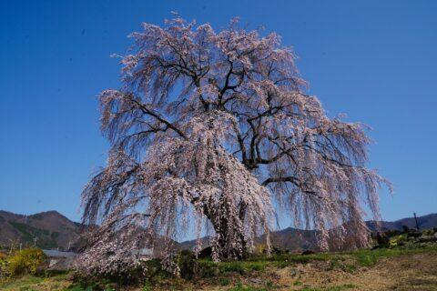 和美の桜 暮らし環境